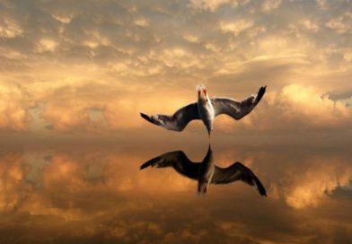 Ռիչարդ Բախ «Ջոնաթան Լիվինգսթոն ճայը» (տեսանյութ)